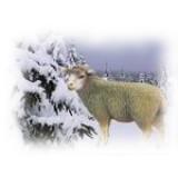 SHEEPSKIN / SHEEP'S WOOL
